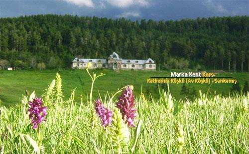 Marka Kent Kars 3 5