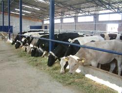 Organik Hayvancılık Projesi