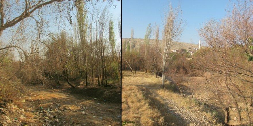 Kars Barajı altında kalan ağaçlar satılacak