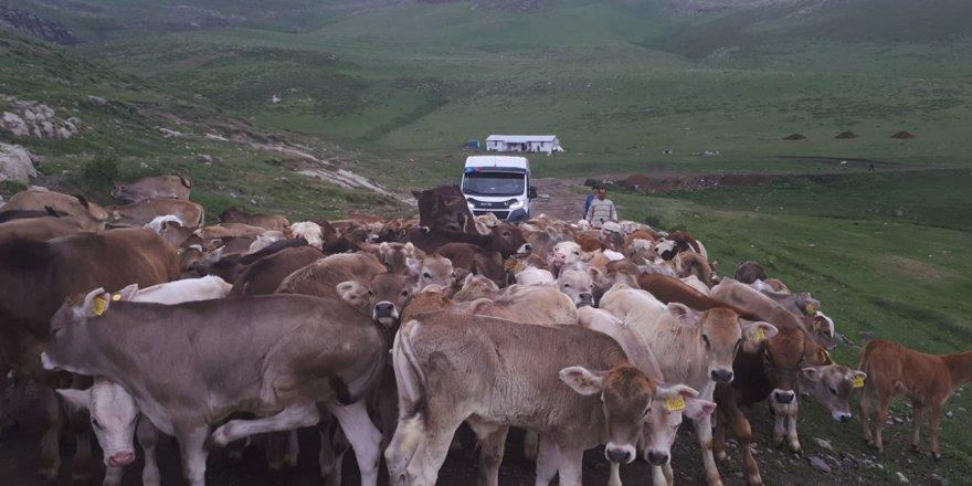 Kars çiftçisi kıtlık korkusu yaşıyor