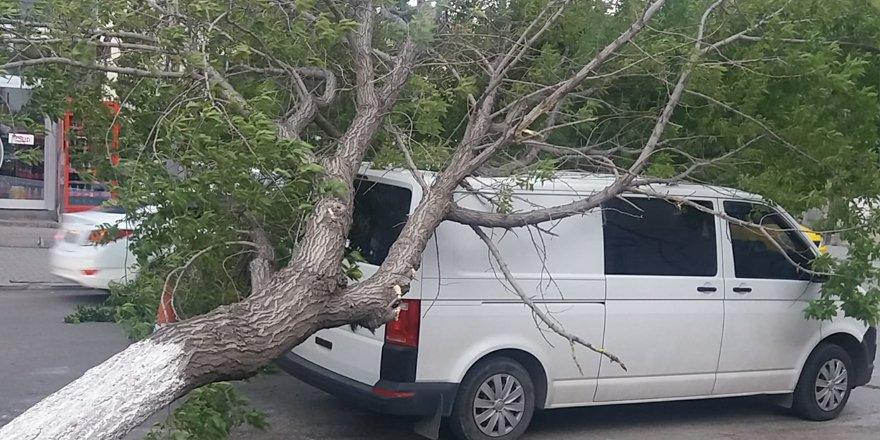 Kars'ta rüzgar aracın üzerine ağaç devirdi