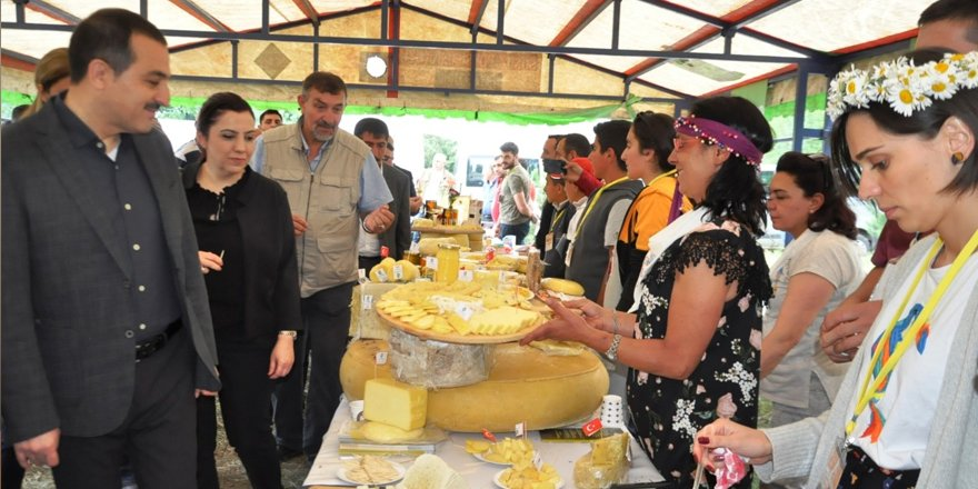 Anadolu peynirleri Cilavuz'da görücüye çıktı