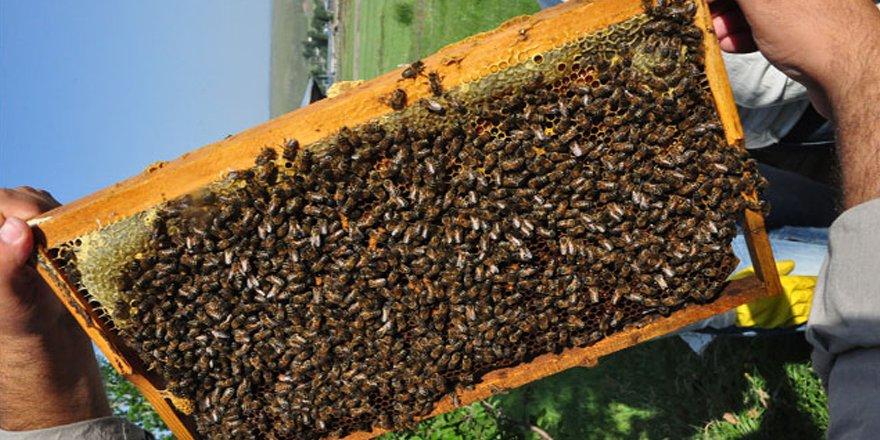 Arıcılar Amerikan yavru çürüklüğü hastalığına karşı uyarıldı