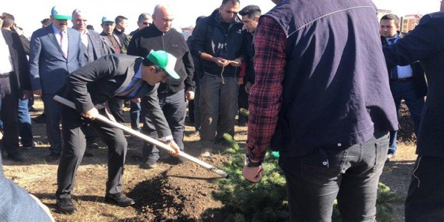 Kars'ta 29 bin fidan toprakla buluştu