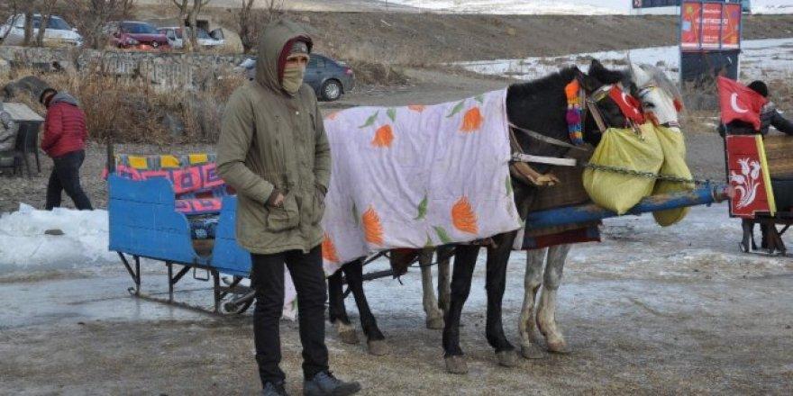 Çıldır'da kızak atlarına battaniyeli koruma