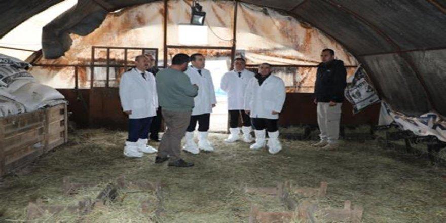 Vali Türker Öksüz, kaz üretim çiftliğini inceledi