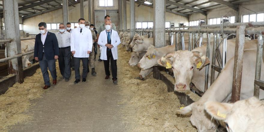 Vali Türker Öksüz, Hayvancılık İşletmesini ziyaret etti