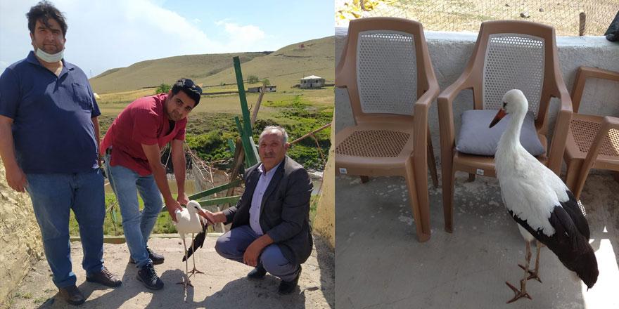 Kars'ta yaralı bulunan leylek tedavi altına alındı