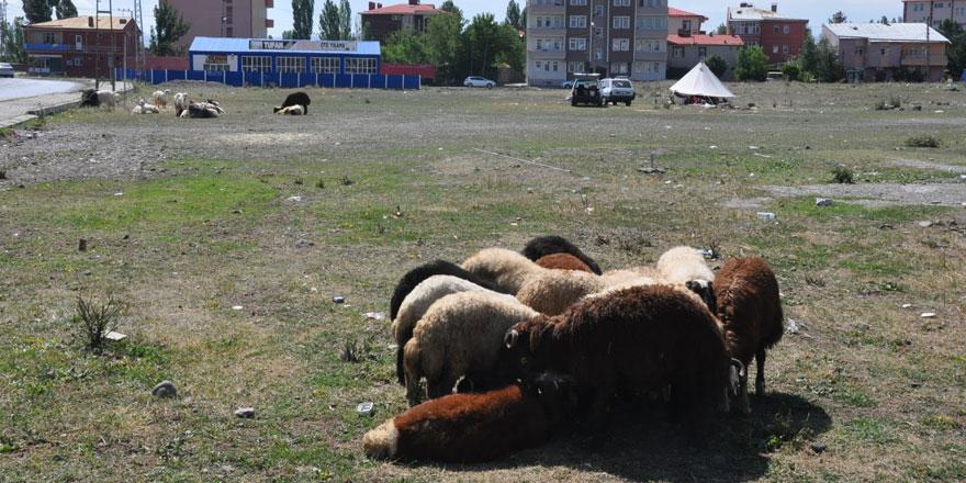 Kars'ta bayramın 2. gününde kurbanlık satışları devam etti