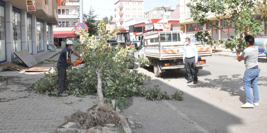 Kars'ta dikkatsizlik bir ağaca mal oldu!