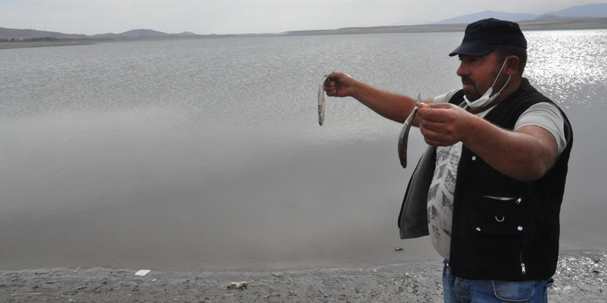 Kars'ta balık ölümleri yaşanıyor... binlerce ölü balık su yüzüne çıktı!