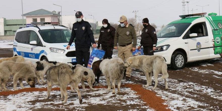 Kars polisi, kısıtlamada sokak hayvanlarını unutmadı