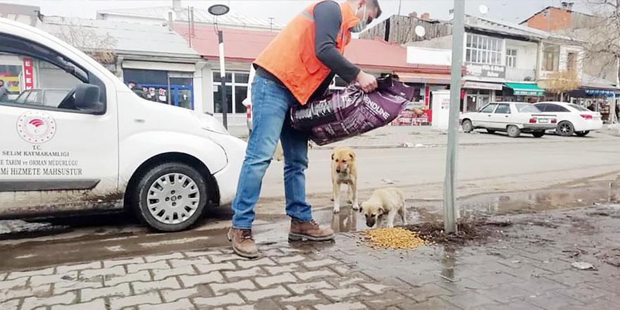 Kaymakam Hatam sokak hayvanlarını unutmadı