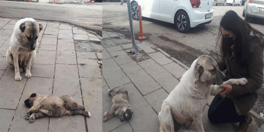Kars'ta anne köpekten insanlık dersi!