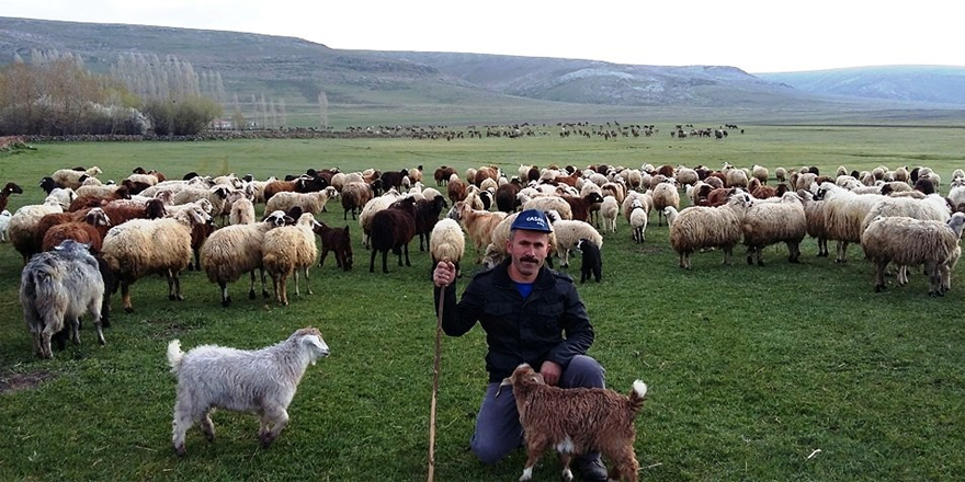 Hayvancılıkta Türkiye'nin zirvesine adım adım