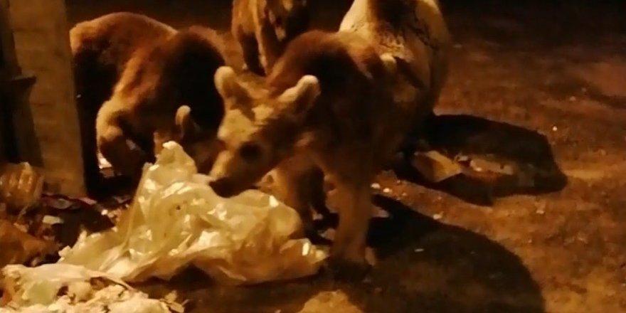 Sarıkamış'ta boz ayılar ilçe merkezine indi