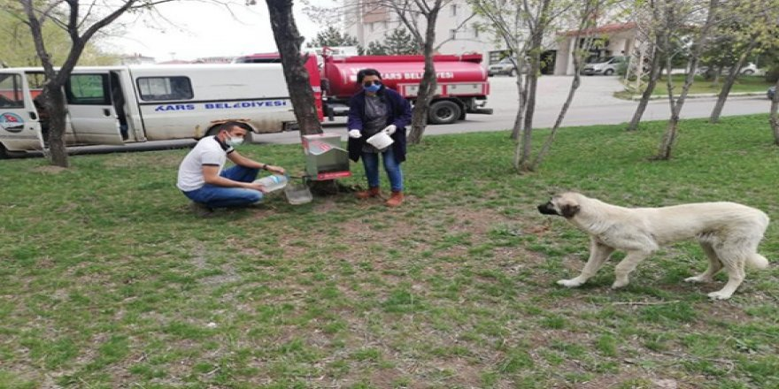 Kars Belediyesi kısıtlamada can Dostları unutmadı