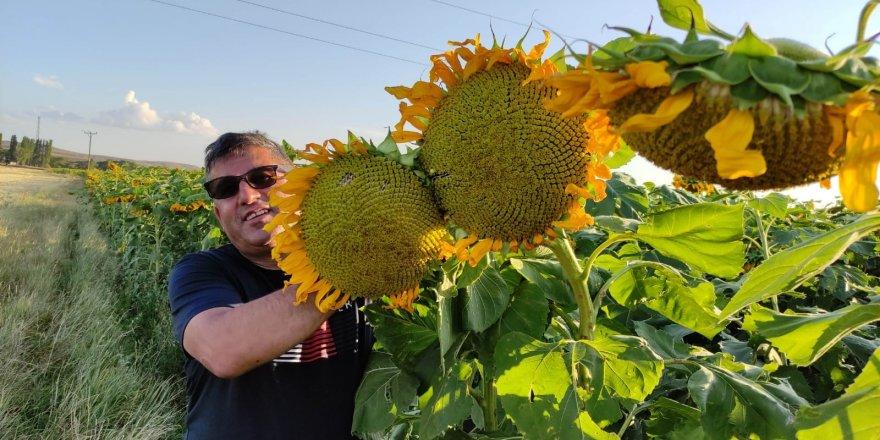 Zeki Demiral, çiftçilere alternatif ürünlerin gerçekleşebileceğini gösterdi