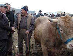 İthal Et ve Hayvana Karşılar
