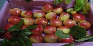 Kağızman Uzun Elma Tescillendi