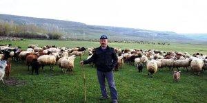 Anaç koyun - keçi destekleme ödemleri devam ediyor