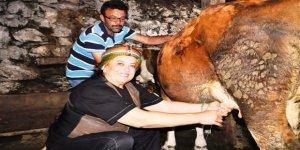 CHP'nin kadın adayı Sadak inek sağdı, ot biçti, traktörle oy istedi