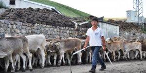 Kars'ta buzağı destekleme icmalleri askıya çıkartıldı