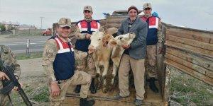 Kars'ta hayvan hırsızları yakalandı