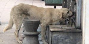 Musluktan su içen köpek ilgi odağı oldu