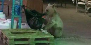 Bekçi ile ayının diyaloğu sosyal medyada yoğun ilgi gördü