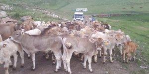 Kars Hayvan Sağlık Zabıtası Komisyon Kararları yayınlandı