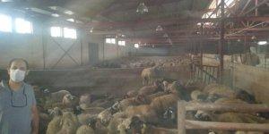 Genç Çiftçilere 2 bin 482 küçükbaş hayvan dağıtıldı