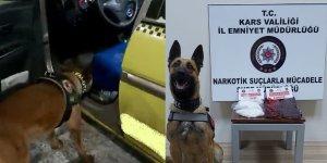 15 bin kişiyi zehirleyecek uyuşturucuları narkotik köpeği 'Odin' buldu
