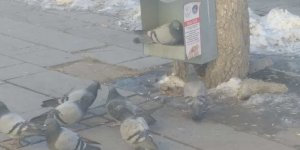 Sokak hayvanlarının yiyecek arayışı