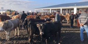 Kars'ta hayvan pazarı 4 gün kapatıldı!