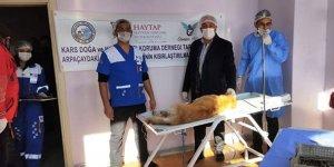 Arpaçay'da sokak hayvanları kısırlaştırılıyor