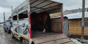 Jandarma 3 ay önce çalınan atları buldu
