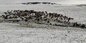 Kars'a mevsimin ilk karı yağdı, çobanlar hazırlıksız yakalandı